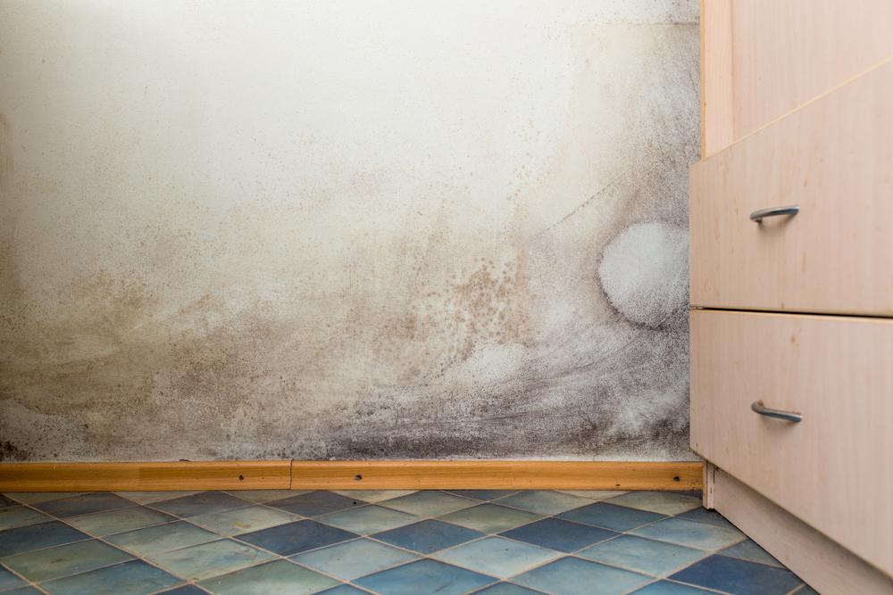 schimmelursache gutperl gmbh wasserschadensanierung und schimmelbeseitigung in fulda bad. Black Bedroom Furniture Sets. Home Design Ideas